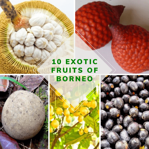 10 exotic fruits of Borneo