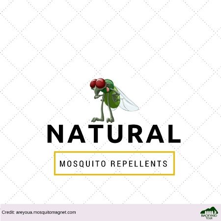 natural mosquitoes repellent remedy
