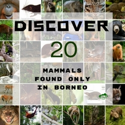 Discover 20 mammals found only in Borneo