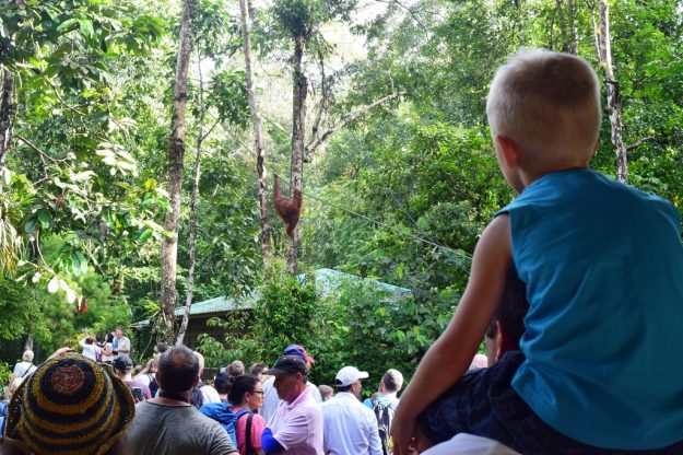 4D3N Mountain Village Experience: Watching orang-utans