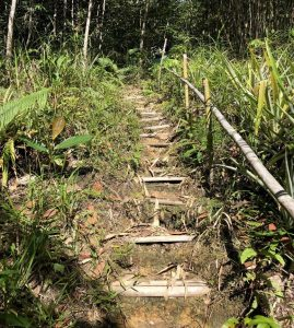 Trekking in Kuching, bamboo pathway with Backyard Tour Malaysia